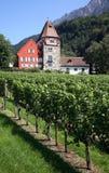 Liechtenstein Vineyard. Liechtenstein Vaduz Vineyard with grand house Stock Images