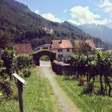 Liechtenstein vineyards. Vineyards with view of Liechtenstein castle royalty free stock photos