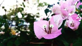 Liefde in de tuin Royalty-vrije Stock Afbeelding