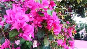 Liefde in de tuin Stock Foto's