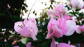 Liefde in de tuin Stock Afbeeldingen