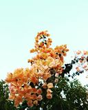 Liefde in de tuin Royalty-vrije Stock Foto's