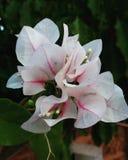 Liefde in de tuin Stock Afbeelding