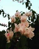 Liefde in de tuin Stock Foto