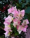 Liefde in de tuin Royalty-vrije Stock Afbeeldingen