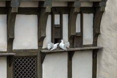 Liefde en duiven stock foto