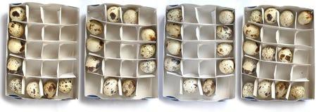 Liefde en eieren Stock Fotografie