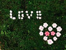 Liefde en hart van bloem Stock Fotografie