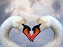 Liefde en zwanen stock fotografie