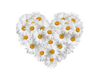 Liefde, hart van madeliefjes Stock Foto