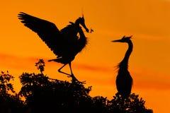 Liefde op de boom met oranje zonsondergang Het wildscène van aard Mooie vogel op de rotsklip Mooie vogels in liefde hoven Stock Fotografie