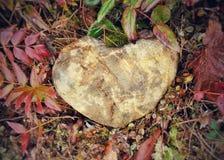 Liefde in PNW Royalty-vrije Stock Foto's