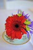 Liefde Rode bloem in een theekopje stock afbeeldingen