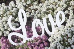 Liefde tussen witte advertentie roze bloemen Stock Afbeeldingen