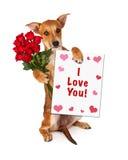 Liefde u Puppy met Rozen Royalty-vrije Stock Foto's