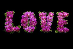 Liefde van bloemen en bladeren van orchideeën met dauwdalingen Royalty-vrije Stock Foto's