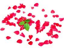 Liefde van roze die bloemblaadjes op witte achtergrond wordt geïsoleerd Royalty-vrije Stock Foto
