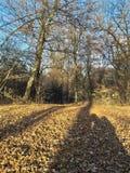 Liefde van schaduw in bos de herfsttijd royalty-vrije stock afbeeldingen