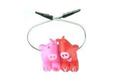 Liefde van varkens stock afbeeldingen