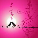 Liefde, vogels die op tak kust Stock Foto's