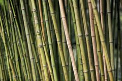 Liefdegravures op het bamboe Royalty-vrije Stock Afbeeldingen