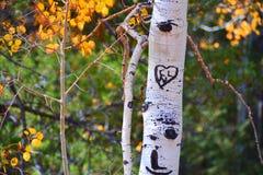 Liefdehart en initialen op een boom stock fotografie