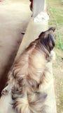 Liefdehond royalty-vrije stock afbeeldingen