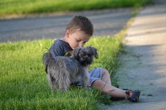 Liefdehond royalty-vrije stock foto's