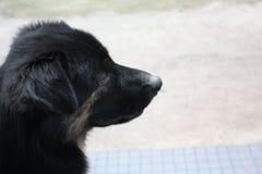 Liefdehuisdier hond het kijken stock fotografie