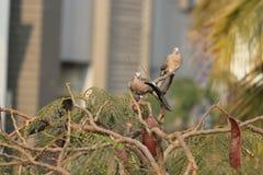 Liefdevogels in de aard die enkel in de ochtend spelen royalty-vrije stock foto's