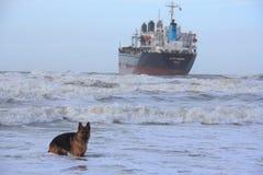Lieferung angeschwemmt in Wijk aan Zee, die Niederlande Stockfotografie