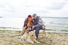 Liegen beim Haustier lizenzfreie stockbilder