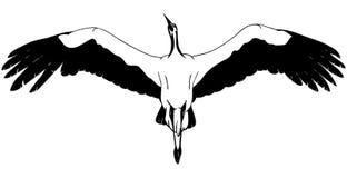 Liegender weißer Storch Lizenzfreie Stockfotos
