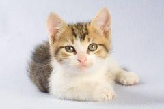 Liegendes gestreiftes Kätzchen, getrennt Stockfotografie