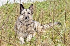 Liegenhund stockbild