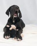 Liegenwhelp mit schwarzem Spielzeug Stockbild