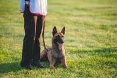 Liegt belgischer Schäferhund der geliebten Hunderasse nahe bei einem Mann an seinen Füßen Lizenzfreie Stockbilder