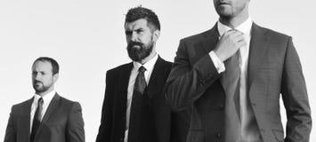 Lien de contacts d'homme d'affaires Les hommes avec la barbe et les visages sérieux regardent en avant, discutent le plan Les dir photo stock