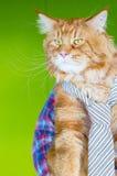 Lien de port de Maine Coon Cat du Chef sérieux et regarder son employé dans le bureau, rencontrant le temps Photos libres de droits