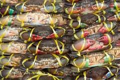 Lien vivant de crabe avec la corde en plastique dans le panier Photos stock