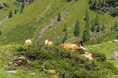 Lienz-Dolomit - Österreich lizenzfreies stockbild
