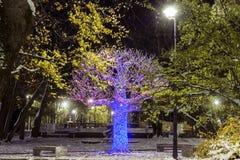 LiepÄ ja på natten Royaltyfria Foton