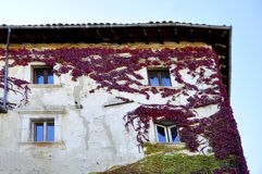 Lierre coloré sur la façade Photos libres de droits