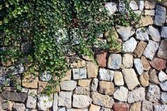 Lierre contre le mur en pierre Photos stock