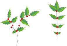 Lierre de houx de Noël Photos libres de droits