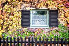 Lierre en automne Photographie stock