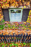 Lierre en automne Photos stock