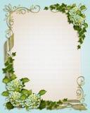 lierre floral d'invitation de hydrangea de cadre Photo libre de droits