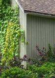 Lierre rampant vers le haut du mur de maison Photographie stock