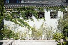 Lierre s'élevant dans le jardin chinois Photo stock
